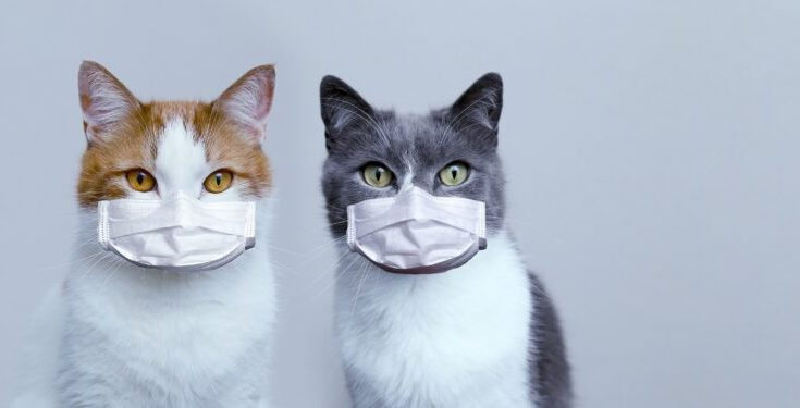 Können Katzen Corona Bekommen
