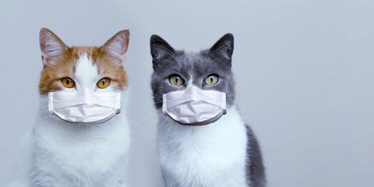 Können Sich Katzen Bei Menschen Anstecken